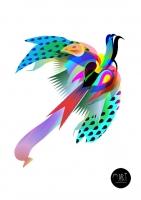 9_oiseau-arcenciel.jpg